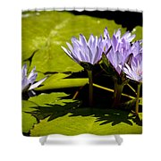 Group Of Lavender Lillies Shower Curtain