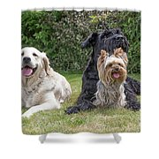 Group Of Three Dogs Shower Curtain