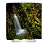 Grove Of Life Shower Curtain by Mike Reid