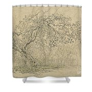 Grove Of Trees [verso] Shower Curtain
