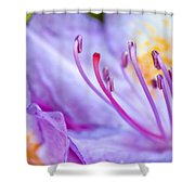 Grow Shower Curtain by Louis Rivera