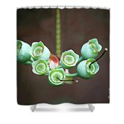Growing Blueberries Shower Curtain