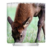 Growing Fast  Shower Curtain