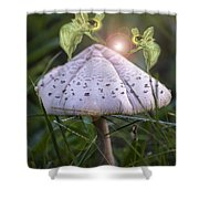 Growing Mushrooms Shower Curtain
