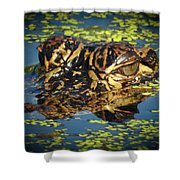 Growing Up Gator, No. 33 Shower Curtain