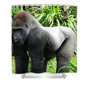 Grumpy Gorilla II Shower Curtain