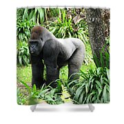 Grumpy Gorilla IIi Shower Curtain