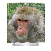 Grumpy Monkey Shower Curtain