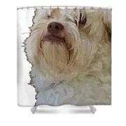 Grumpy Terrier Dog Face Shower Curtain