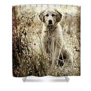 Grunge Puppy Shower Curtain by Meirion Matthias