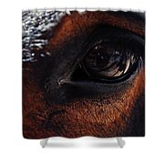 Guadalupe Mountains National Park Mule Shower Curtain