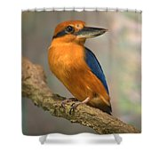 Guam Kingfisher Todiramphus Cinnamominus Shower Curtain