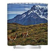 Guanacos In Patagonia Shower Curtain