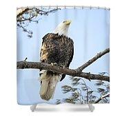 Guardian Perch Shower Curtain