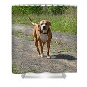 Guarding Pit Bull Dog Shower Curtain