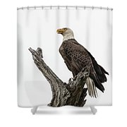 Guarding The Nest Shower Curtain