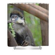 Guenon   4 Shower Curtain