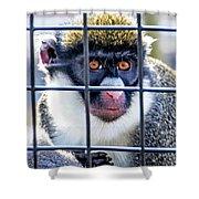 Guenon Monkey Shower Curtain