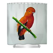 Guianan Cock-of-the-rock Shower Curtain