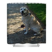 Guide Dog Shower Curtain
