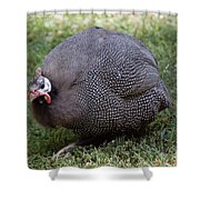 Guinnea Fowl On The Run Shower Curtain