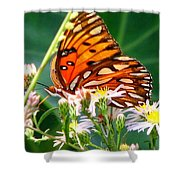 Gulf Fritillary 1 Shower Curtain
