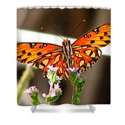 Gulf Fritillary 2 Shower Curtain