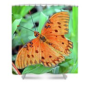 Gulf Fritillary Butterfly Cropped Shower Curtain