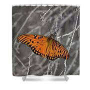 Gulf Fritillary Butterfly In The Brambles Shower Curtain