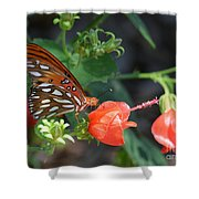 Gulf Fritillary Butterfly On Beautiful Flowers  Shower Curtain