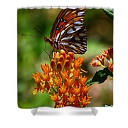 Gulf Fritillary On Butterflyweed Shower Curtain