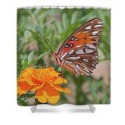 Gulf Fritillary On Marigold Shower Curtain