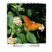 100_5412 Gulf Fritillary Shower Curtain