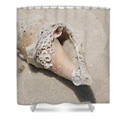Gulf Of Mexico Shell Shower Curtain