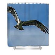 Gulf Osprey Shower Curtain