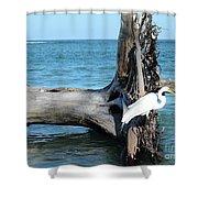 Gulf Shallows Shower Curtain