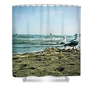 Gull Beach Shower Curtain