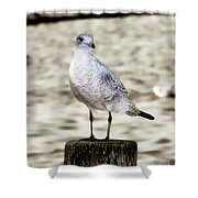 Gull Shower Curtain
