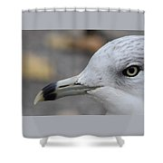 Gull Eye Shower Curtain