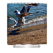 Gull Fight Shower Curtain