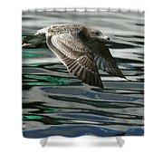 Gull Flight Shower Curtain