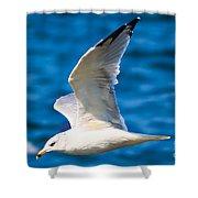 Gull Flying Shower Curtain