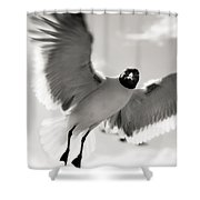 Gull In Flight 2 Shower Curtain