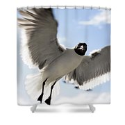 Gull In Flight Shower Curtain