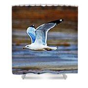 Gull Inflight Shower Curtain