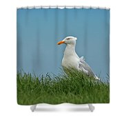 Gull Lookout Shower Curtain