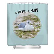 Gull Nap Time Shower Curtain