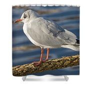 Gull On A Rope Shower Curtain