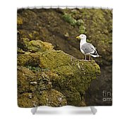Gull On Cliff Edge Shower Curtain