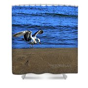 Gull On The Beach  Shower Curtain